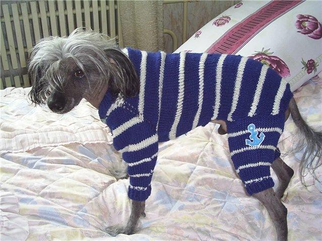 Одежда на собаку своими руками фото
