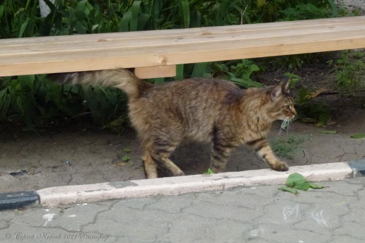 1. Кот №1