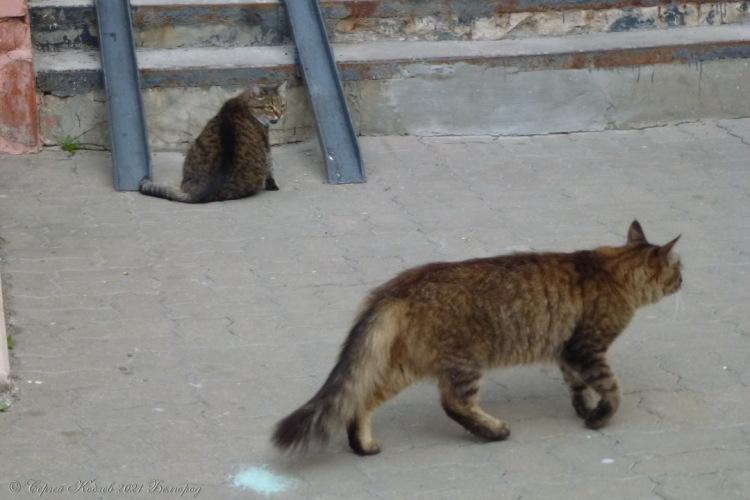 2. Кот №1 проходит мимо кота №2