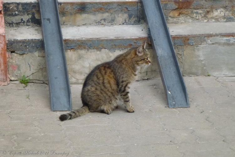 3. Кот №2